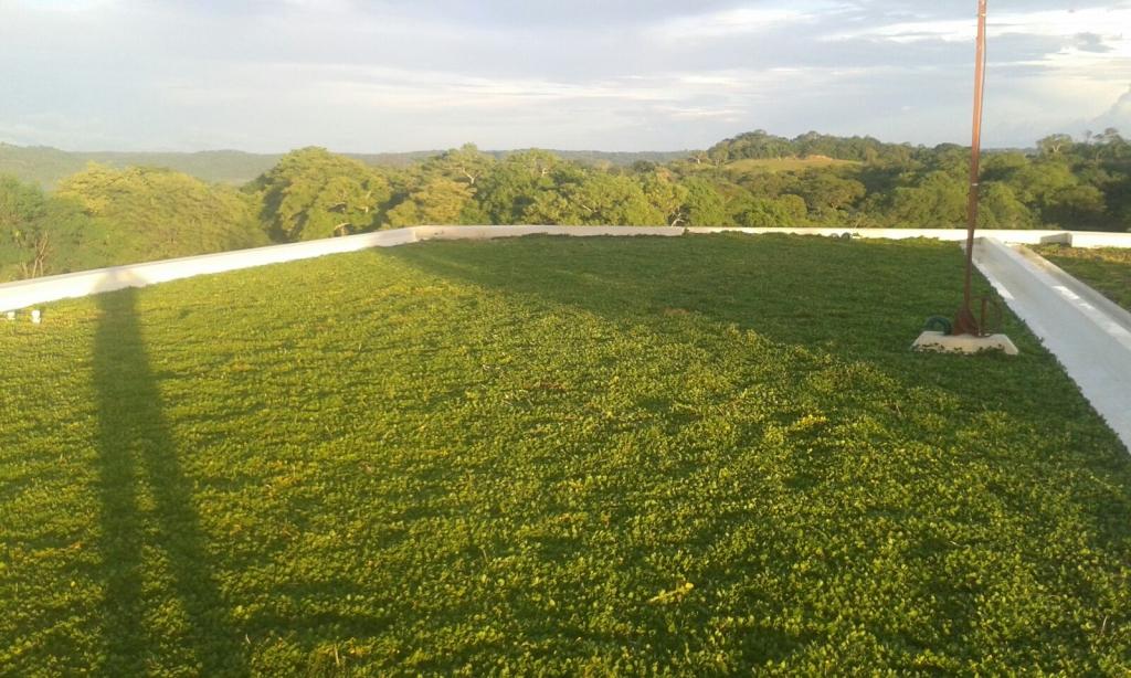 Green Roofs_Proper form1