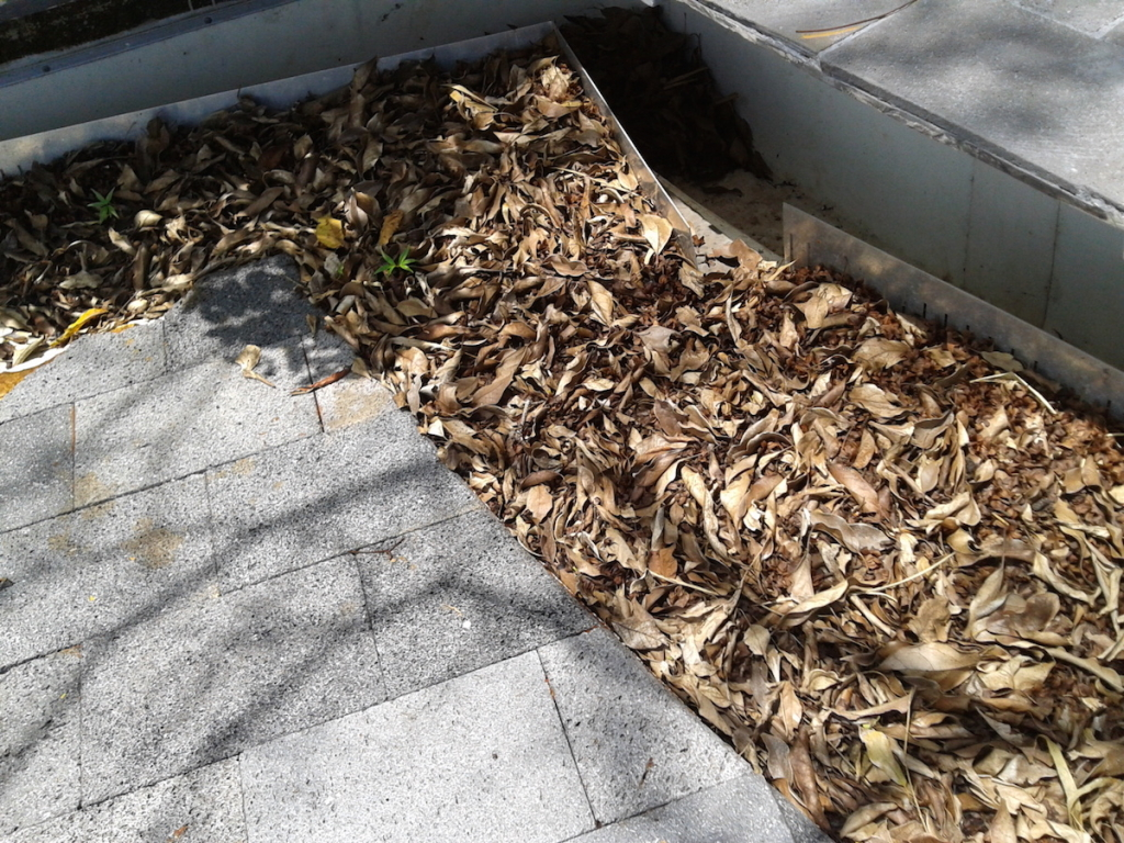 Leaves accumulating on the roof can easily clog even the best-designed roof
